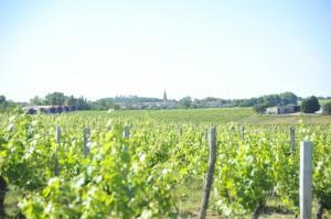 Histoire du vignoble de Château Suau